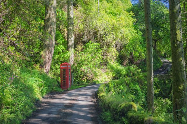 Phone box in the woods